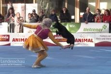 Embedded thumbnail for Vlaamse winst op WK DogDance